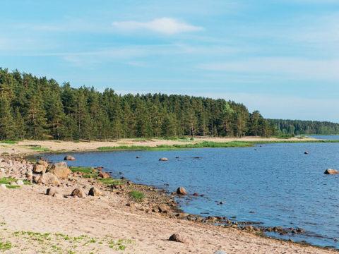 Сосновый пляж